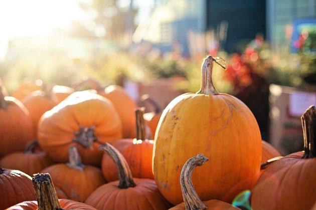 pumpkins-2871269_640